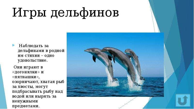 Игры дельфинов Наблюдать за дельфинами в родной им стихии – одно удовольствие. Они играют в «догонял
