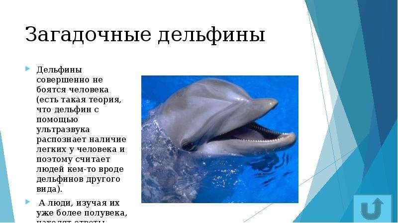 Загадочные дельфины Дельфины совершенно не боятся человека (есть такая теория, что дельфин с помощью