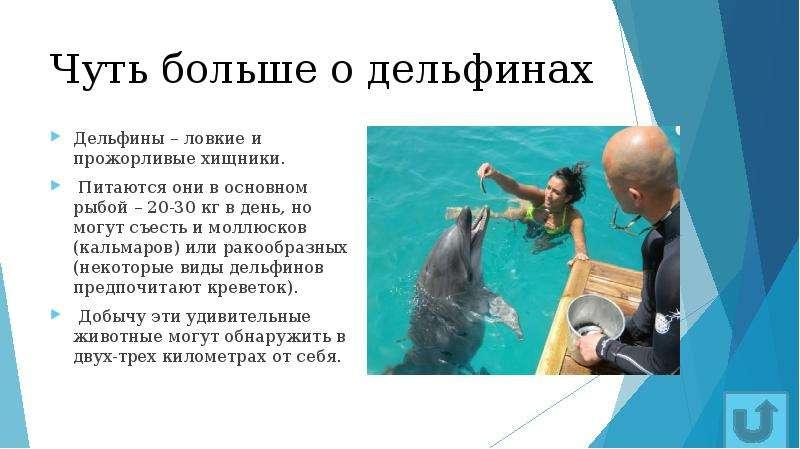 Чуть больше о дельфинах Дельфины – ловкие и прожорливые хищники. Питаются они в основном рыбой – 20-