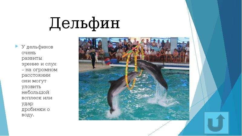 Дельфин У дельфинов очень развиты зрение и слух – на огромном расстоянии они могут уловить небольшой