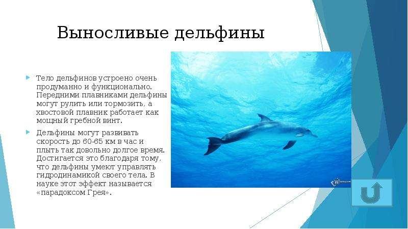 Выносливые дельфины Тело дельфинов устроено очень продуманно и функционально. Передними плавниками д