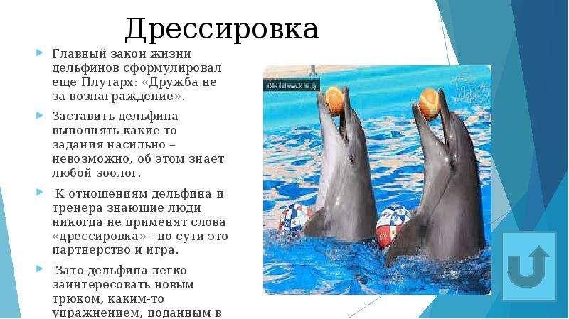 Дрессировка Главный закон жизни дельфинов сформулировал еще Плутарх: «Дружба не за вознаграждение».