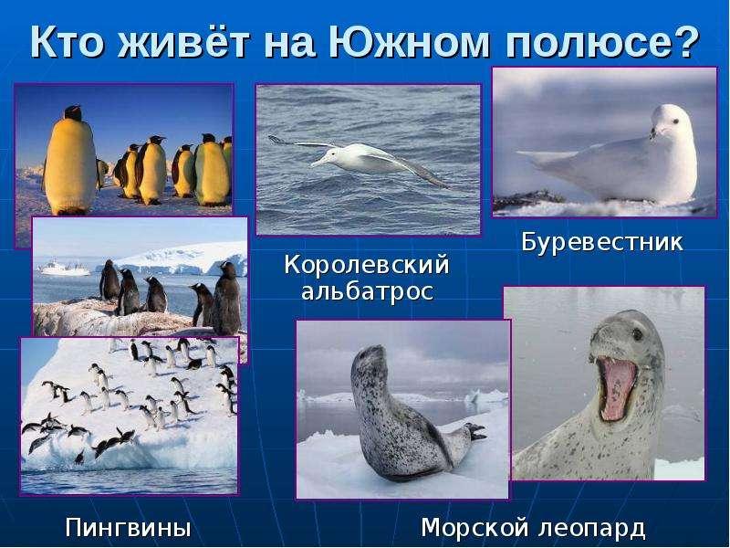 Работа на южном полюсе