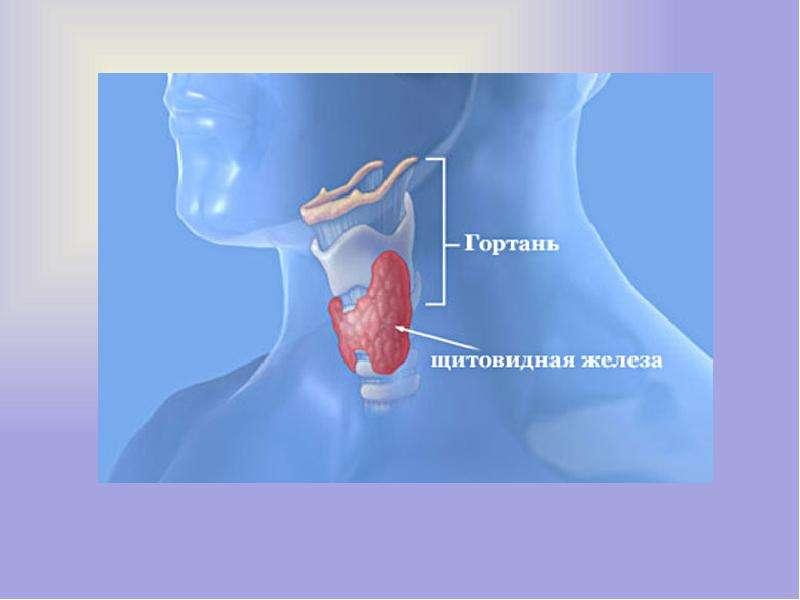 Роль йода в организме, слайд 5