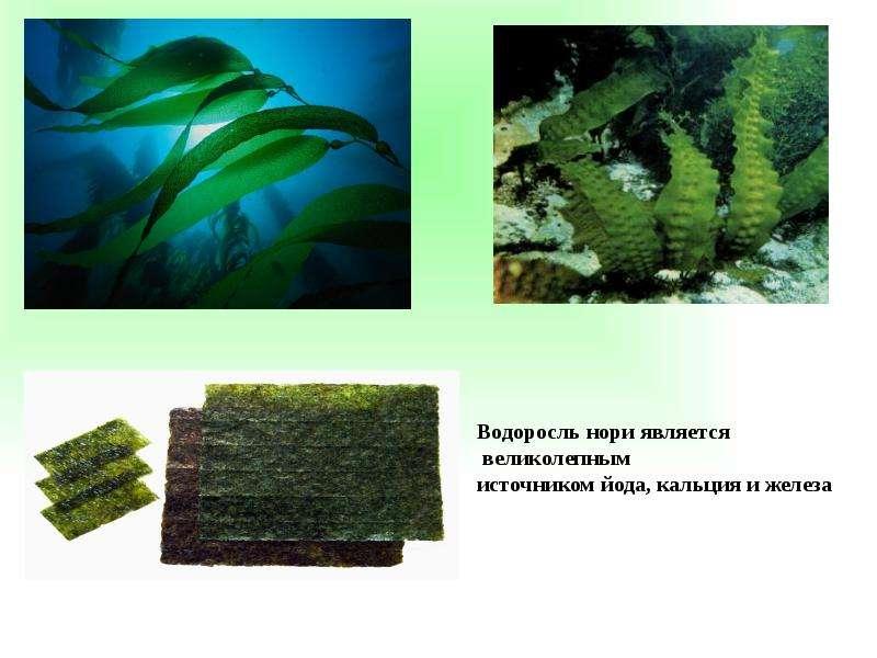Роль йода в организме, слайд 7