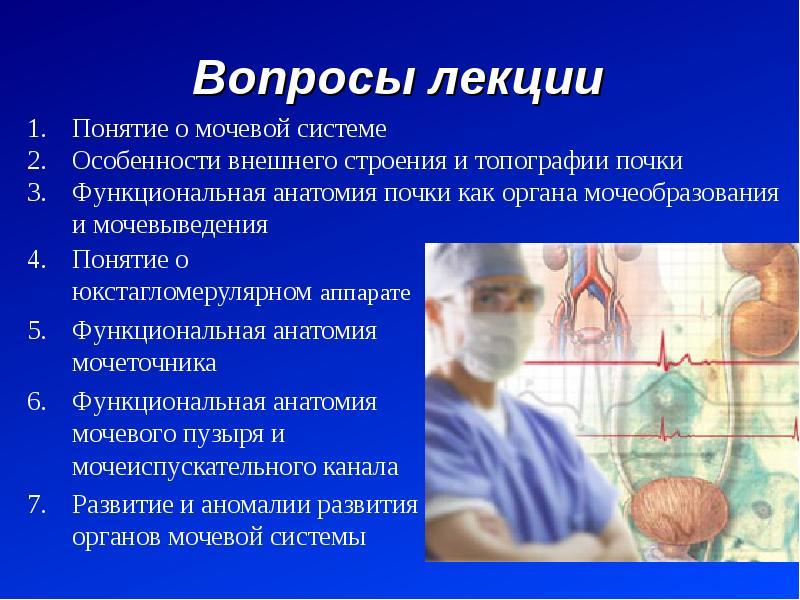 Вопросы лекции Понятие о юкстагломерулярном аппарате Функциональная анатомия мочеточника Функциональ