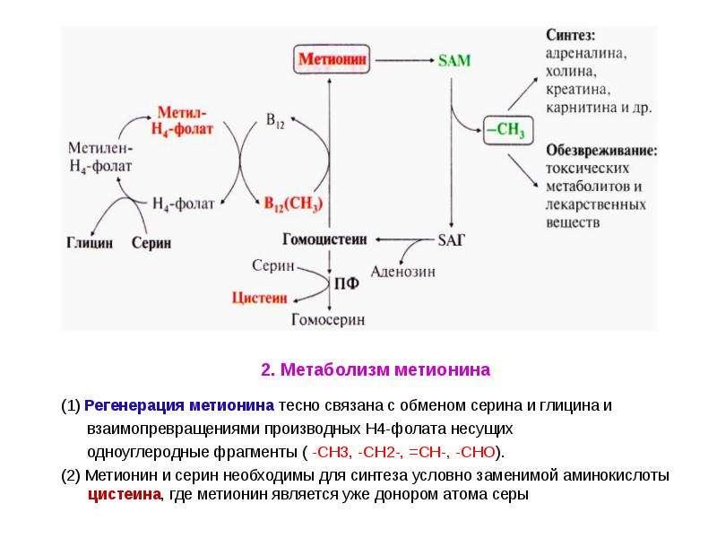 состоит ободка реакция превращения казеиногена в казеин картинки ослаблении иммунитета