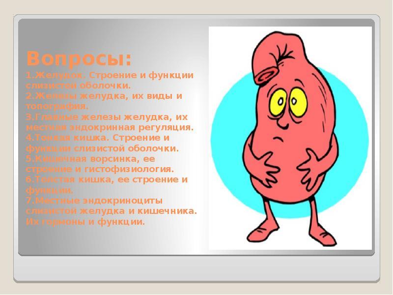 Вопросы: 1. Желудок. Строение и функции слизистой оболочки. 2. Железы желудка, их виды и топография.