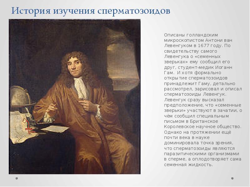 История изучения сперматозоидов Описаны голландским микроскопистом Антони ван Левенгуком в 1677 году