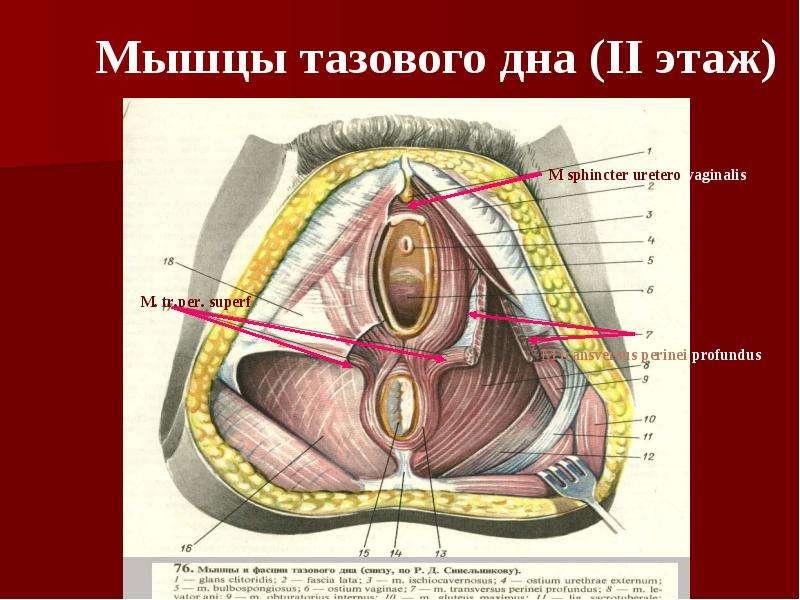 Электростимуляция мышц тазового дна