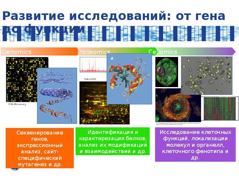 Развитие исследований: от гена до функции