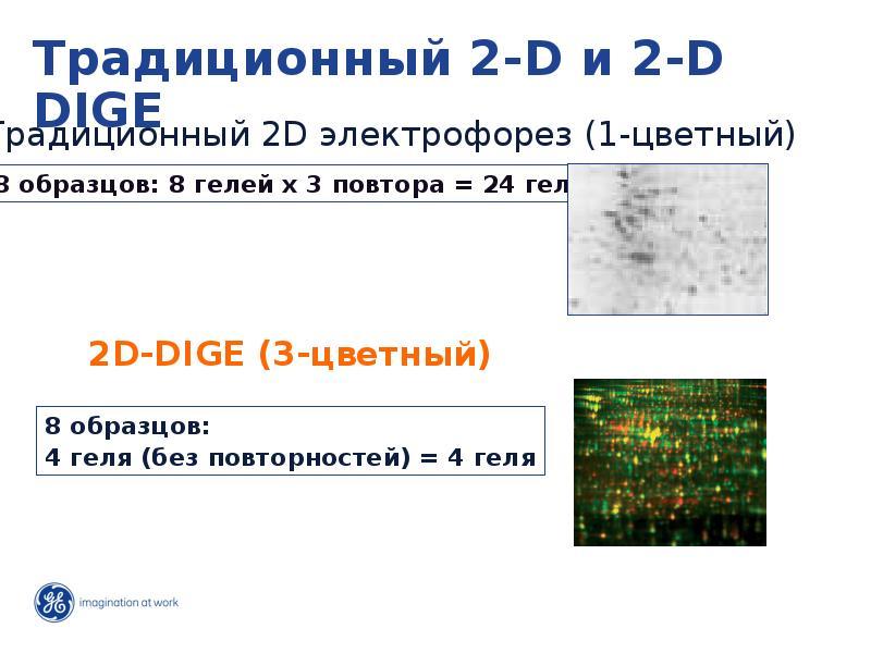 Развитие исследований: от гена до функции, слайд 12