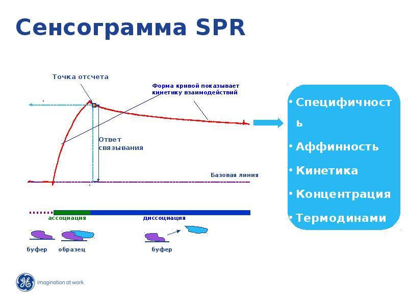 Сенсограмма SPR