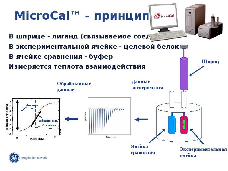 Развитие исследований: от гена до функции, слайд 18