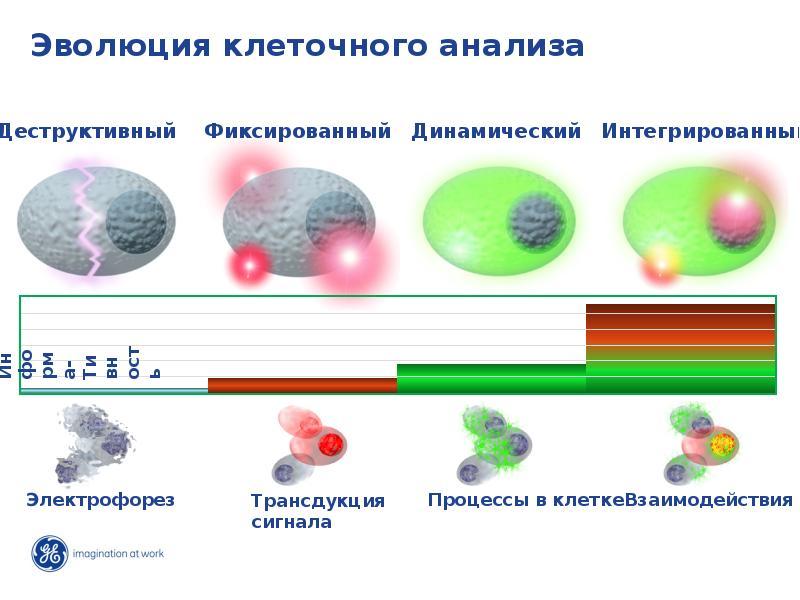 Эволюция клеточного анализа