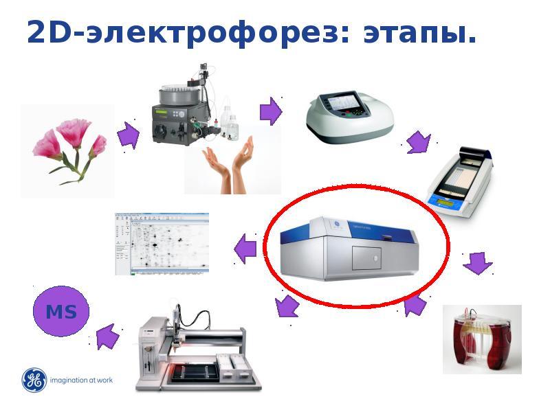 2D-электрофорез: этапы.