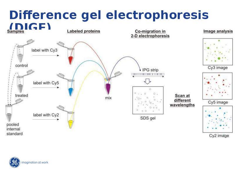 Развитие исследований: от гена до функции, слайд 10