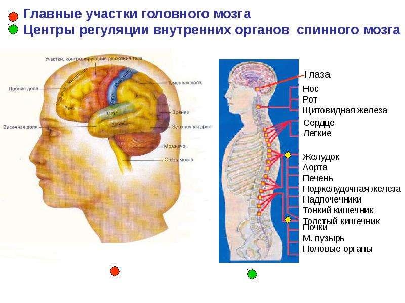 ПЕРВАЯ ПОМОЩЬ ПРИ ТРАВМЕ ГОЛОВЫ, слайд 9