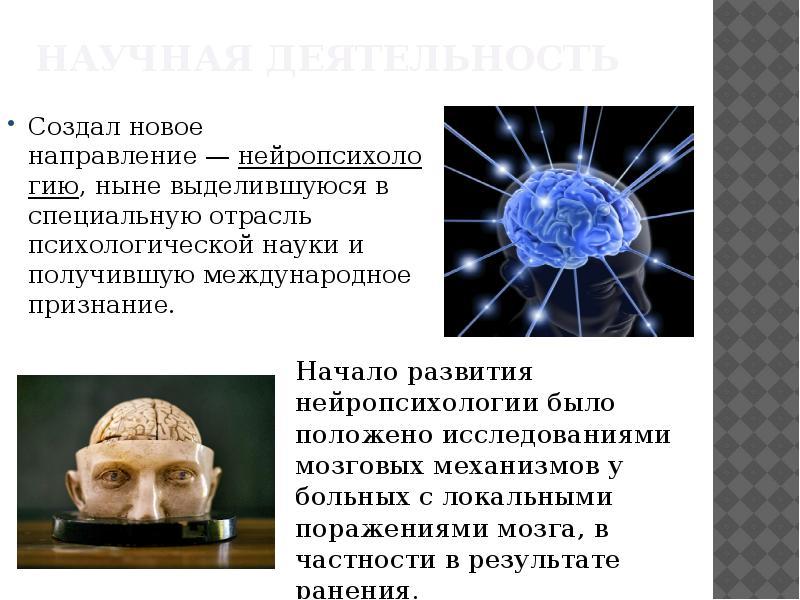 Создал новое направление — нейропсихологию, ныне выделившуюся в специальную отрасль психологической