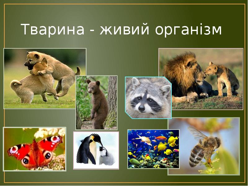 Тварина - живий організм