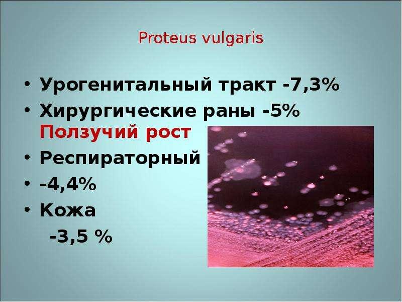 Proteus vulgaris Урогенитальный тракт -7,3% Хирургические раны -5% Ползучий рост Респираторный тракт