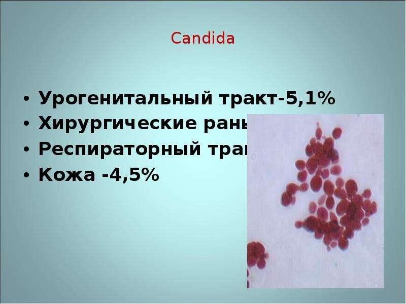Candida Урогенитальный тракт-5,1% Хирургические раны- 1,4 % Респираторный тракт-4,2% Кожа -4,5%