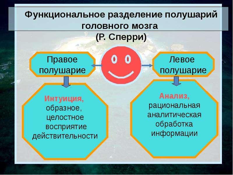 Функциональное разделение полушарий головного мозга (Р. Сперри)