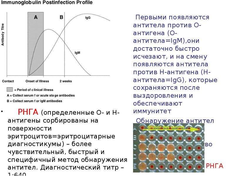 Возбудители брюшного тифа и паратифов, слайд 19