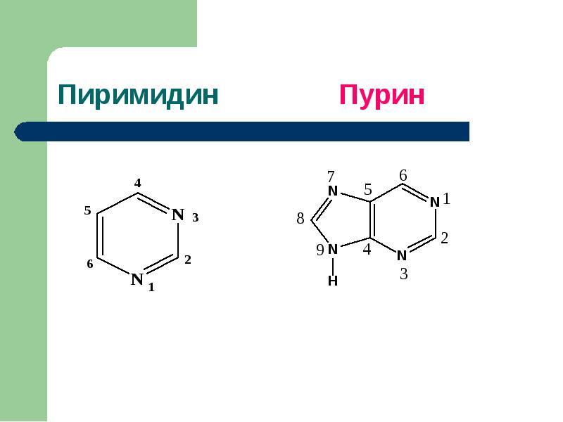 Болезни обмена пуринов и пиримидинов Витамины, участвующие в биосинтезе азотистых оснований, слайд 2