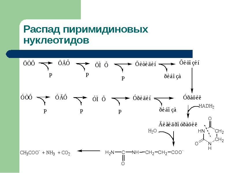 Болезни обмена пуринов и пиримидинов Витамины, участвующие в биосинтезе азотистых оснований, слайд 18