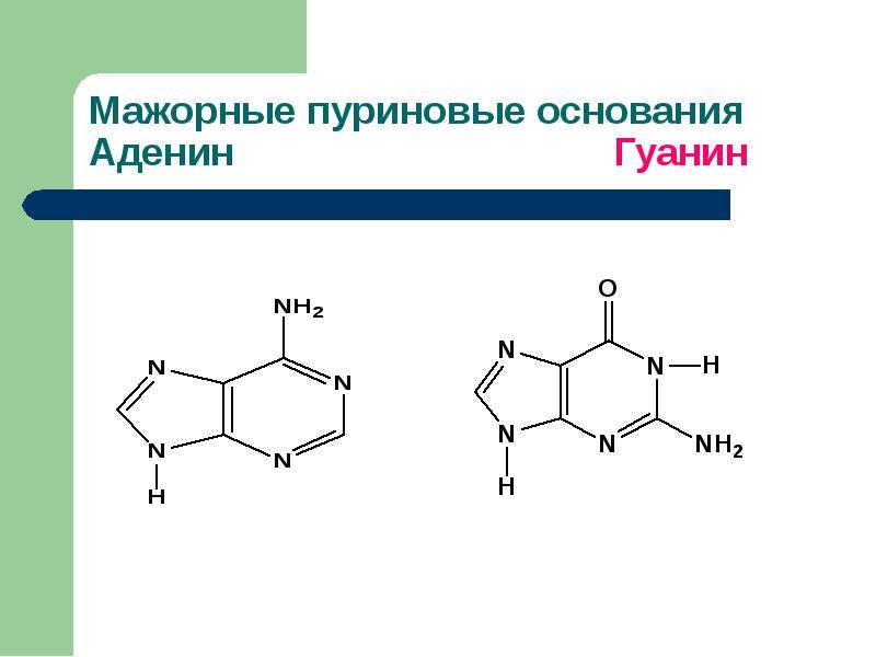 Болезни обмена пуринов и пиримидинов Витамины, участвующие в биосинтезе азотистых оснований, слайд 5