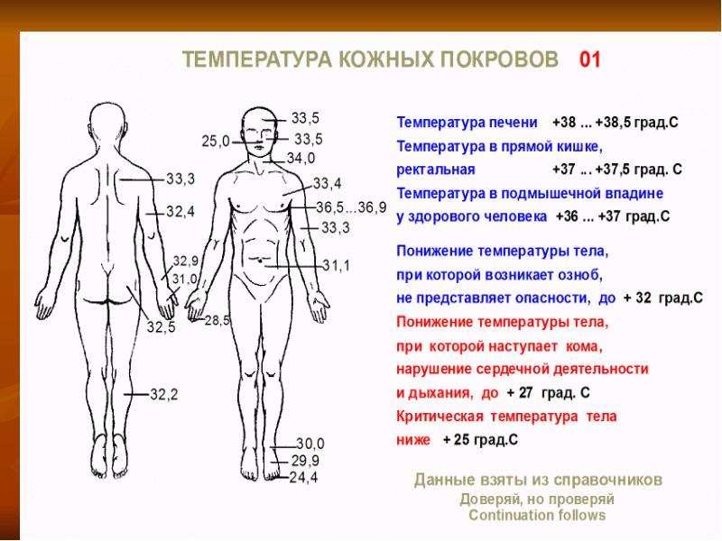 Физиология обмена веществ и терморегуляции, рис. 38
