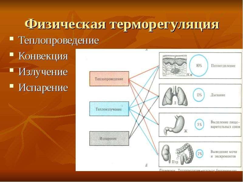 Физическая терморегуляция Теплопроведение Конвекция Излучение Испарение