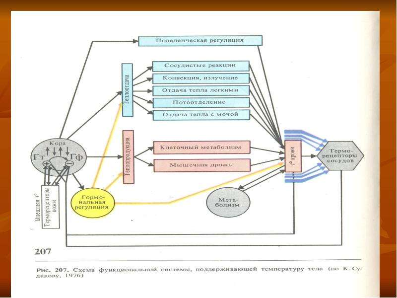 Физиология обмена веществ и терморегуляции, рис. 50
