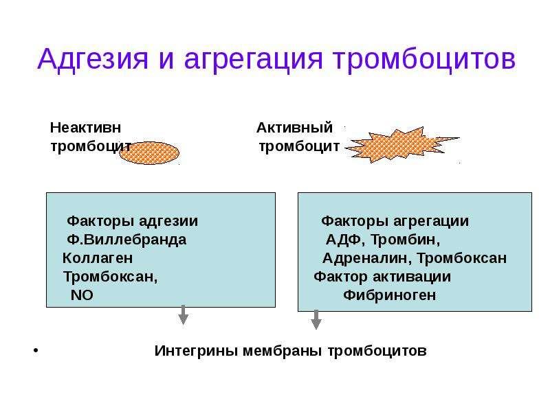 Адгезия и агрегация тромбоцитов Неактивн Активный тромбоцит тромбоцит Факторы адгезии Факторы агрега