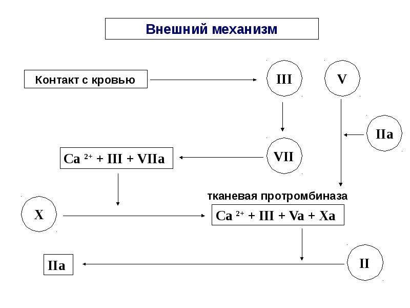 Физиологические основы свертывания и переливания крови, слайд 18