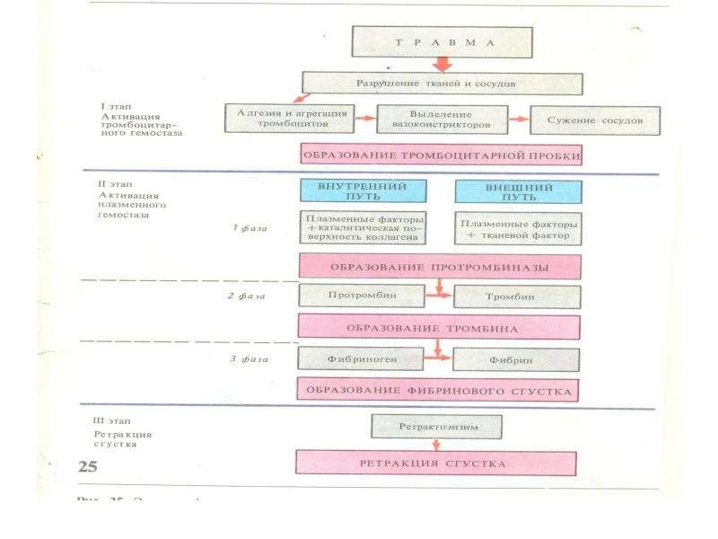 Физиологические основы свертывания и переливания крови, слайд 22