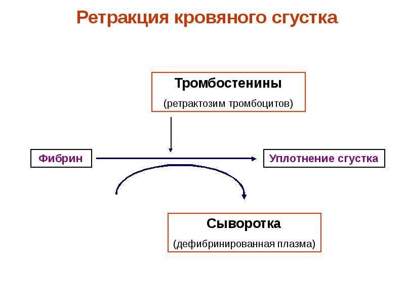 Физиологические основы свертывания и переливания крови, слайд 23