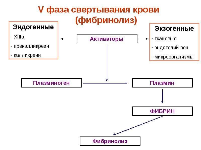 Физиологические основы свертывания и переливания крови, слайд 25