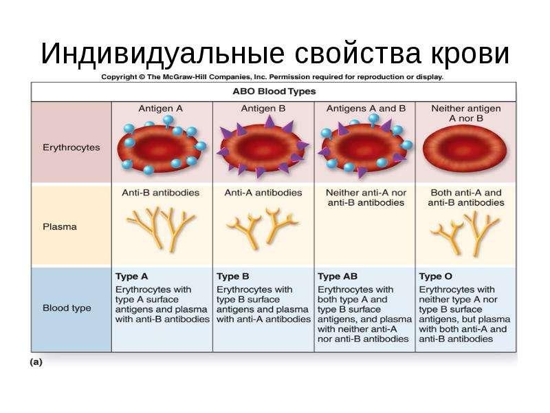 Индивидуальные свойства крови