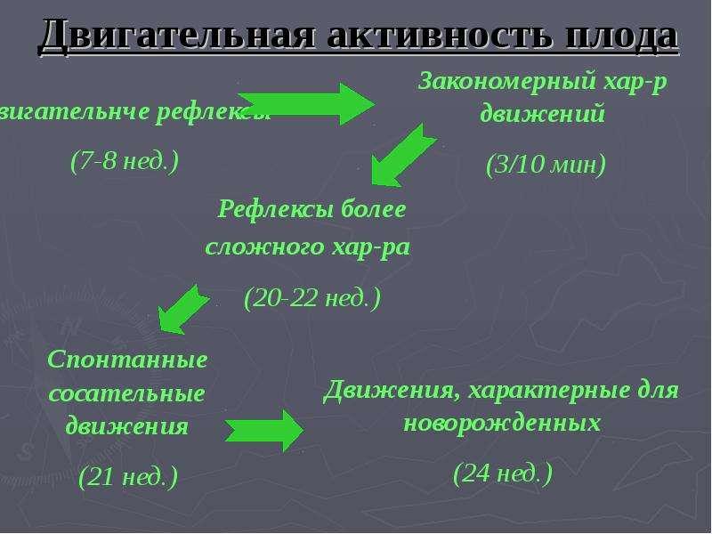 Возрастные особенности соматических функций, слайд 22