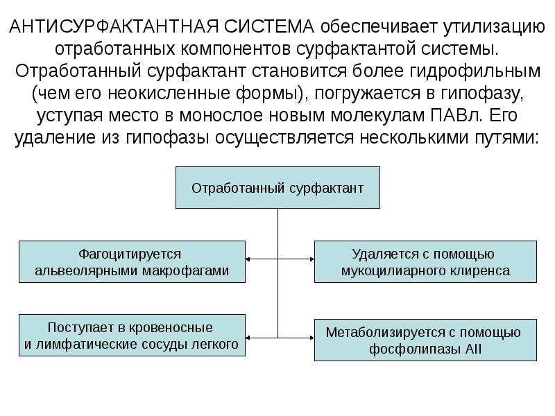 АНТИСУРФАКТАНТНАЯ СИСТЕМА обеспечивает утилизацию отработанных компонентов сурфактантой системы. От