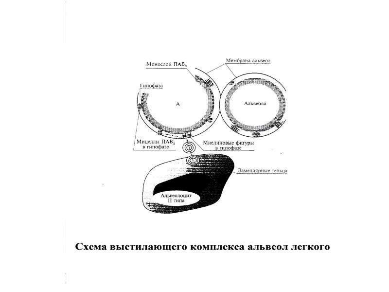 Патофизиология внешнего дыхания, слайд 47
