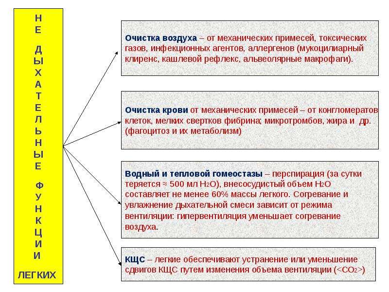 Патофизиология внешнего дыхания, слайд 7