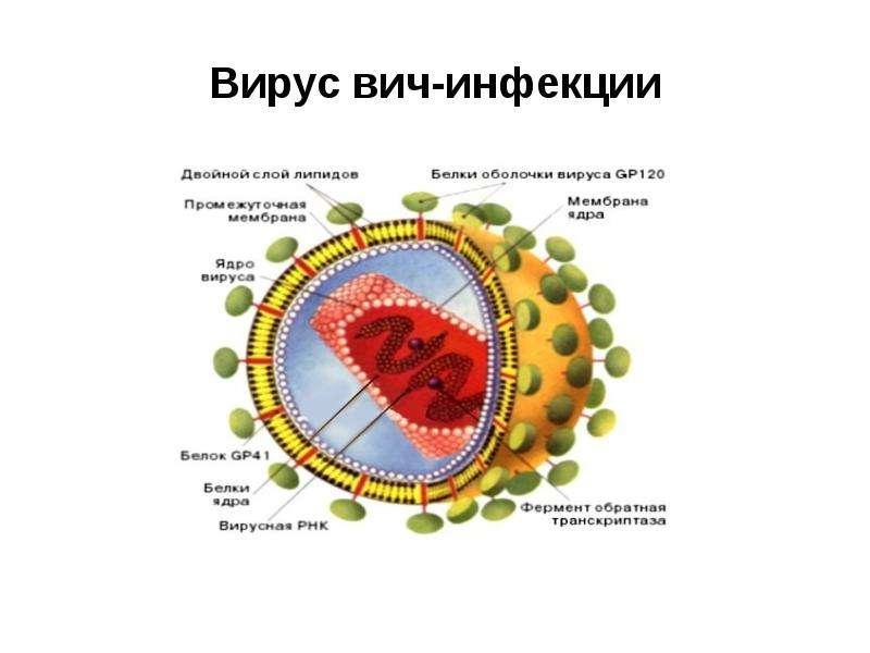 Вирус вич-инфекции