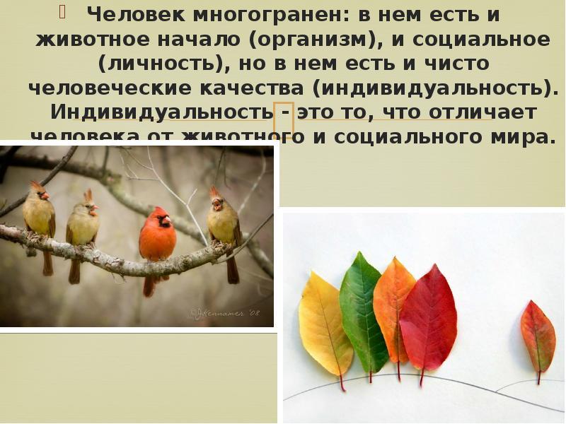 Человек многогранен: в нем есть и животное начало (организм), и социальное (личность), но в нем есть