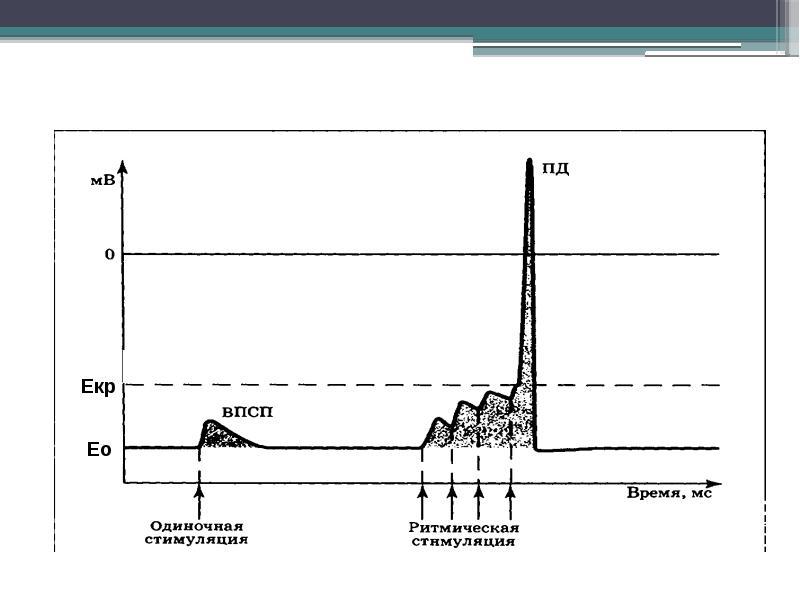 Физиология центральной нервной системы Рефлекс, рефлекторная дуга, синапс, нервные центры, слайд 37