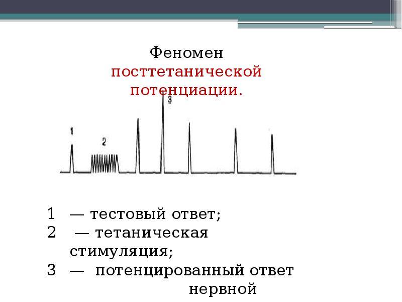 Физиология центральной нервной системы Рефлекс, рефлекторная дуга, синапс, нервные центры, слайд 38