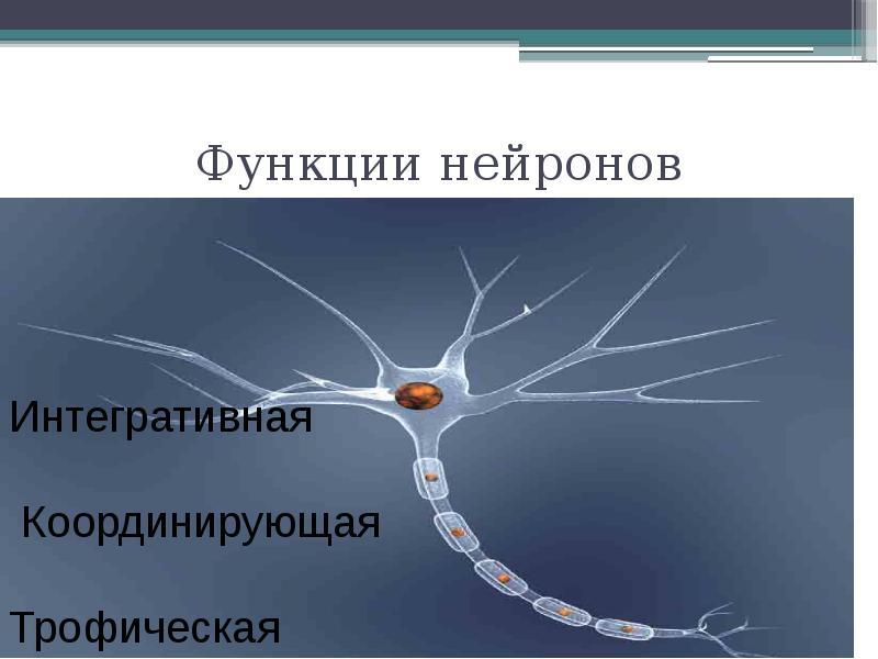 Функции нейронов