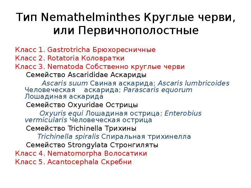 Тип Nemathelminthes Круглые черви, или Первичнополостные Класс 1. Gastrotricha Брюхоресничные Класс